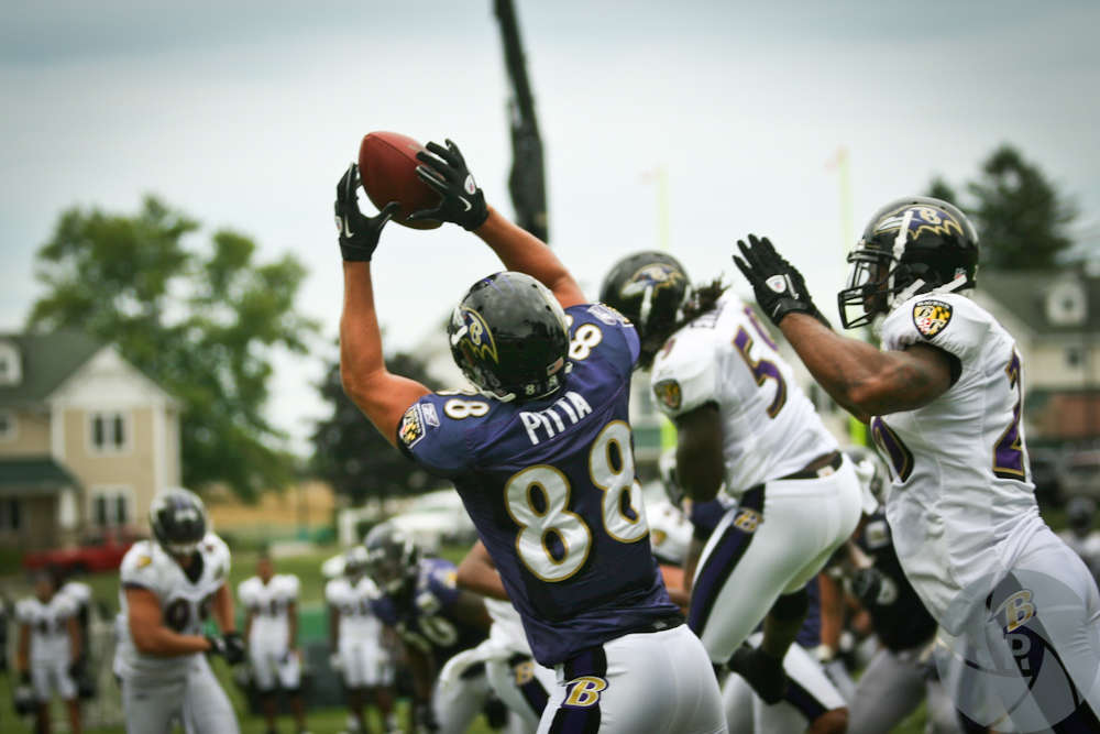Dennis Pitta. By Phil Romans.